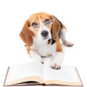 Hund am lesen
