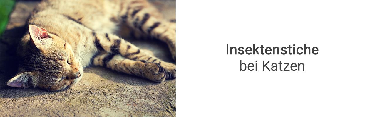 insektenstiche bei katzen richtig handeln vetplan blog. Black Bedroom Furniture Sets. Home Design Ideas