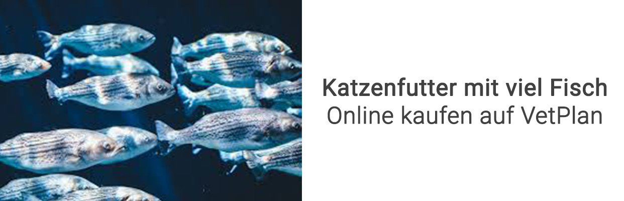 Viel fisch online-dating